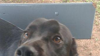 El perro que aprendió a proteger a su dueña de los ataques epilépticos