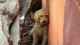 Elaboran catastro de mascotas perdidas por terremoto en México