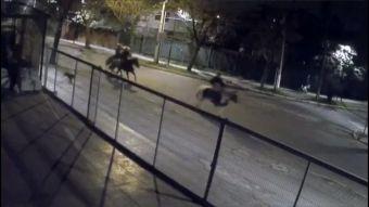 [VIDEO] Los Pincheira: Banda cometía asaltos a caballo