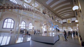 #Hayqueir: Museo de Historia Natural y la Peluquería Francesa