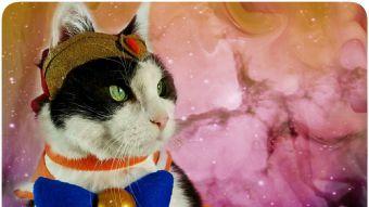 [FOTOS] El gato más fanático de Sailor Moon