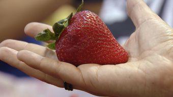 [VIDEO] Se esperan bajas de hasta un 30% en algunas frutas de verano