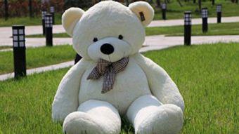Encargaron un oso por Amazon y se llevaron una gran sorpresa