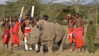 Rinoceronte en Kenia