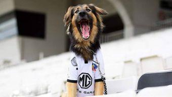 """[VIDEO] Conoce a Capitán, el perro que """"cumplió su sueño"""" de ser adoptado por Colo Colo"""