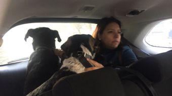 [VIDEO] Perros de hombre asesinado en la Alameda buscan hogar