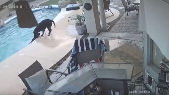 [VIDEO] Perro héroe salvó a su amigo de morir ahogado