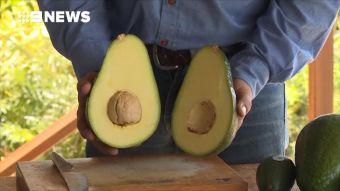 [VIDEO] Avozilla: Así es la palta gigante