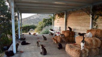 El trabajo perfecto para muchos: pagan por cuidar gatos en una isla paradisiaca de Grecia