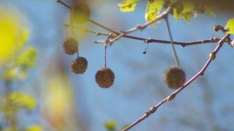 [VIDEO] Llega la Primavera: Conoce las aplicaciones para convivir con alergias