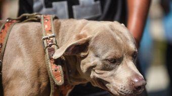 [FOTOS] Bolillo, el perro que viaja con la caravana de migrantes hondureños