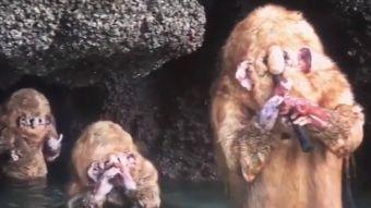[VIDEO] La verdad sobre las extrañas criaturas que aparecieron en Tailandia