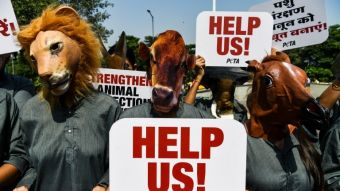 ONG animalista inicia cruzada para eliminar frases como matar dos pájaros de un tiro