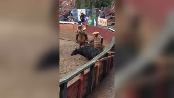 [VIDEO] Primera querella por maltrato animal en rodeo