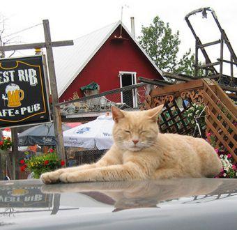 Murió Stubbs: El gato alcalde de una ciudad de Alaska