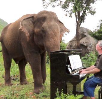 [VIDEO] Hombre da concierto a elefantes ciegos en Tailandia