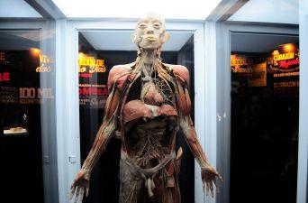 [FOTOS] Inauguran la nueva exposición de Bodies Cuerpos Humanos Reales