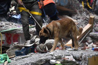 [FOTOS] México sigue buscando bajo los derrumbes