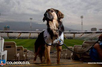 [FOTOS] Capitán: Colo Colo adopta a un quiltro como la mascota oficial del club