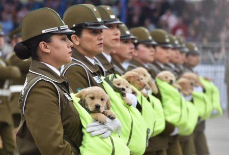 Perros parada militar 2018