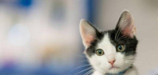 Heces de gatos podrían vincularse con el desarrollo de enfermedades mentales