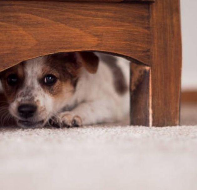 Consejos para que tu perro no sufra con los fuegos artificiales