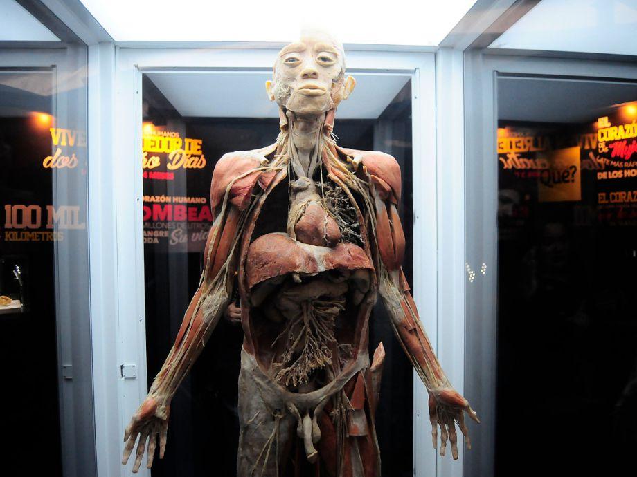 Bodies Cuerpos Humanos Reales: muestra en Florida Center | Tele 13